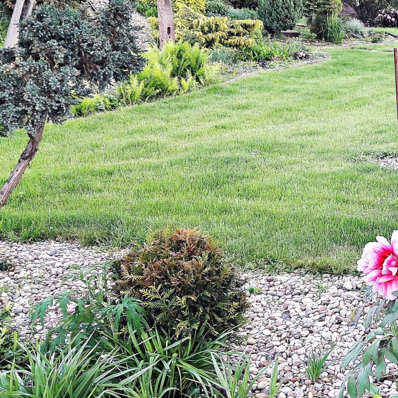 Trawnik po zimie.