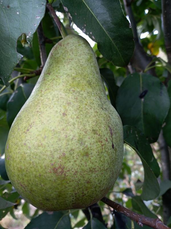 Czas na sadzenie młodych drzewek owocowych.