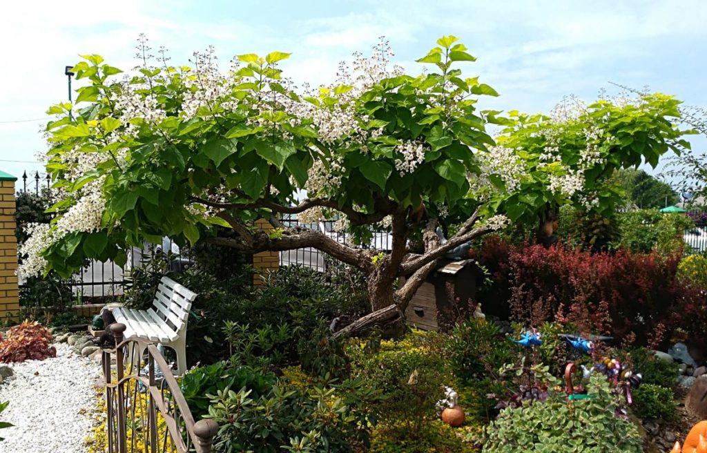 Polecamy drzewa i krzewy o atrakcyjnym wyglądzie