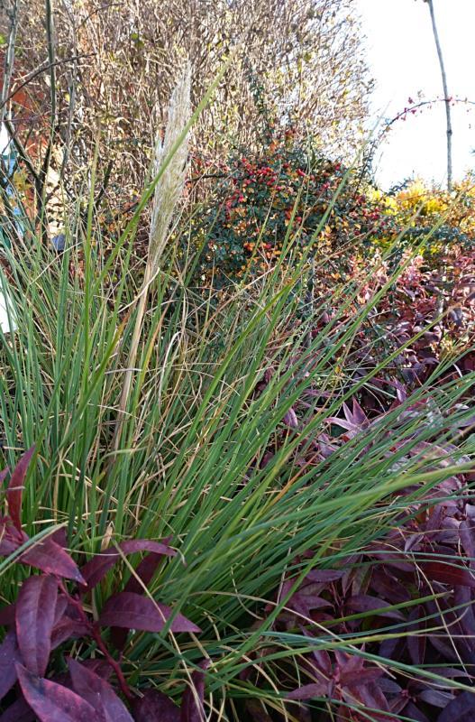 Marzenie o trawie - jak zimować