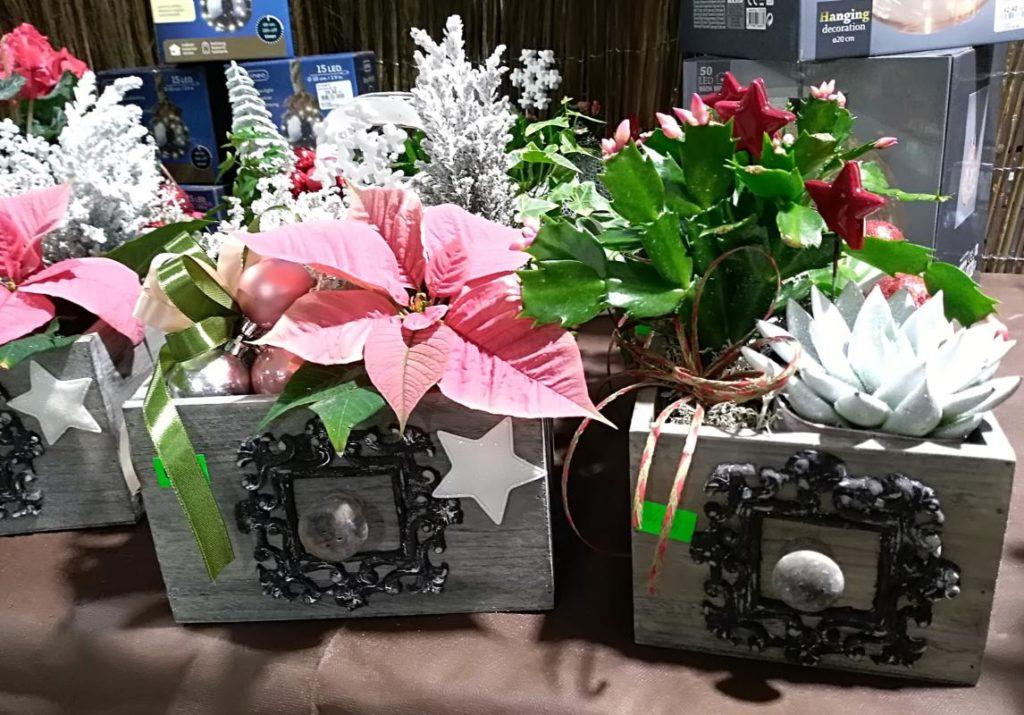 Rośliny na Boże Narodzenie