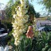 Rośliny które kochają upały